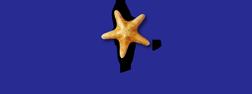 logo-new9